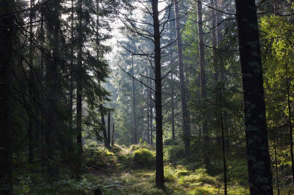 Skogen är vårt klassrum. Överlevnadsfilosofi